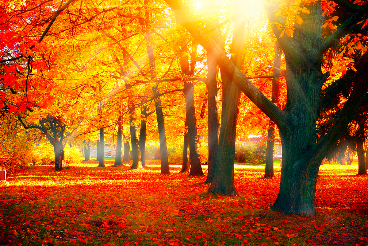 autumn fall scene nature beauty park autumnal background landscape leaves forest trees copy fairy orange colors ring fantasy discovery pathway